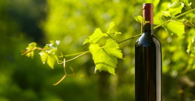 Por qué los vinos ecológicos son el futuro