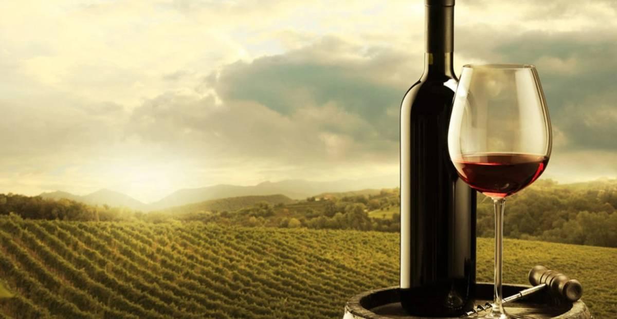 Todo lo que tienes que saber del Vino Malbec Argentino 3