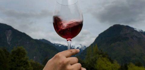 Todo lo que tienes que saber del Vino Malbec Argentino 23