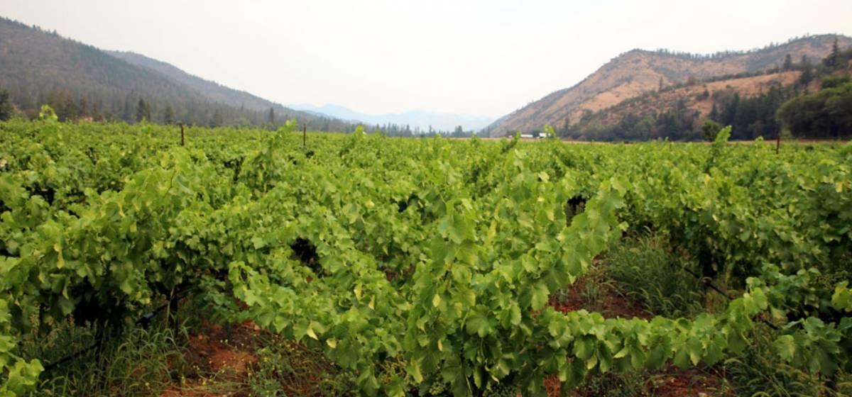 rogue valley wine: Una visita online a estas bodegas 23