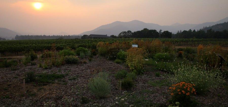 rogue valley wine: Una visita online a estas bodegas 7