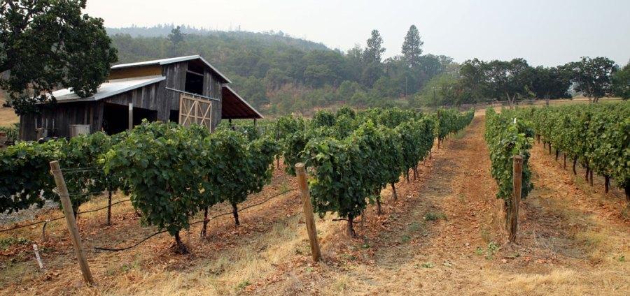 rogue valley wine: Una visita online a estas bodegas 8